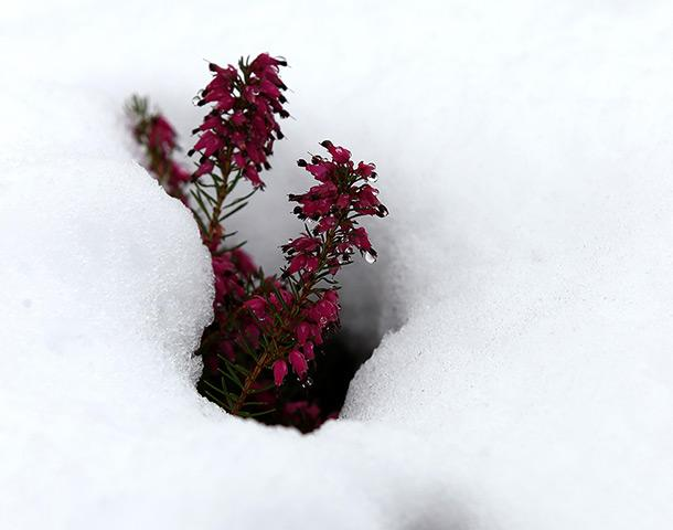 В Шотландии 3000 человек остались без света из-за снега