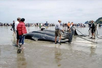 desyatok delfinov mertvy v tailande