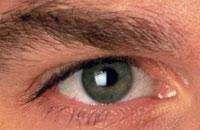 Строение глаза. Фото с сайта www.terrapinphoto.com