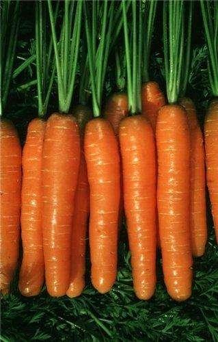 Морковный сок для лечения насморка у детей